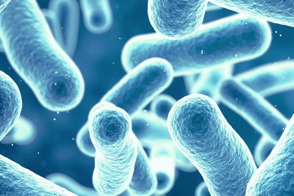 abteilungen-bakteriologie